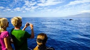 hawaii tours3